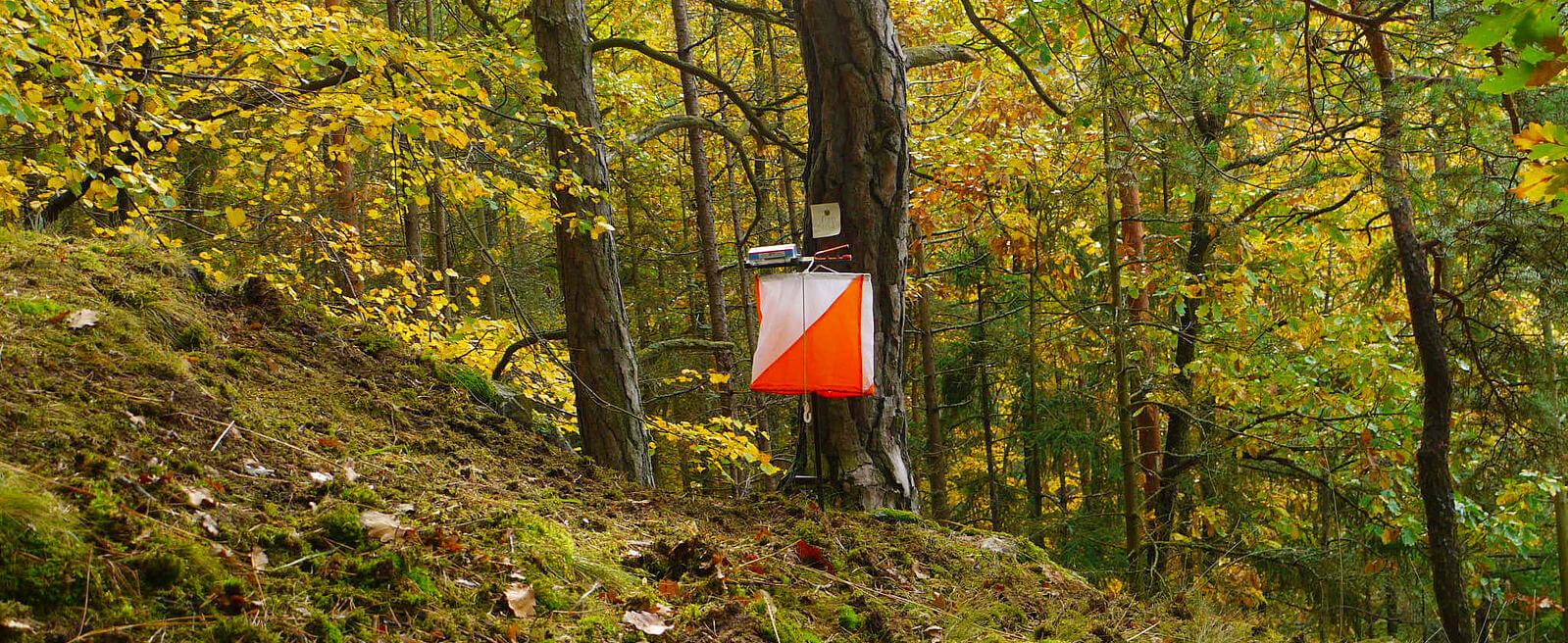 Orienteringsskärm i skog