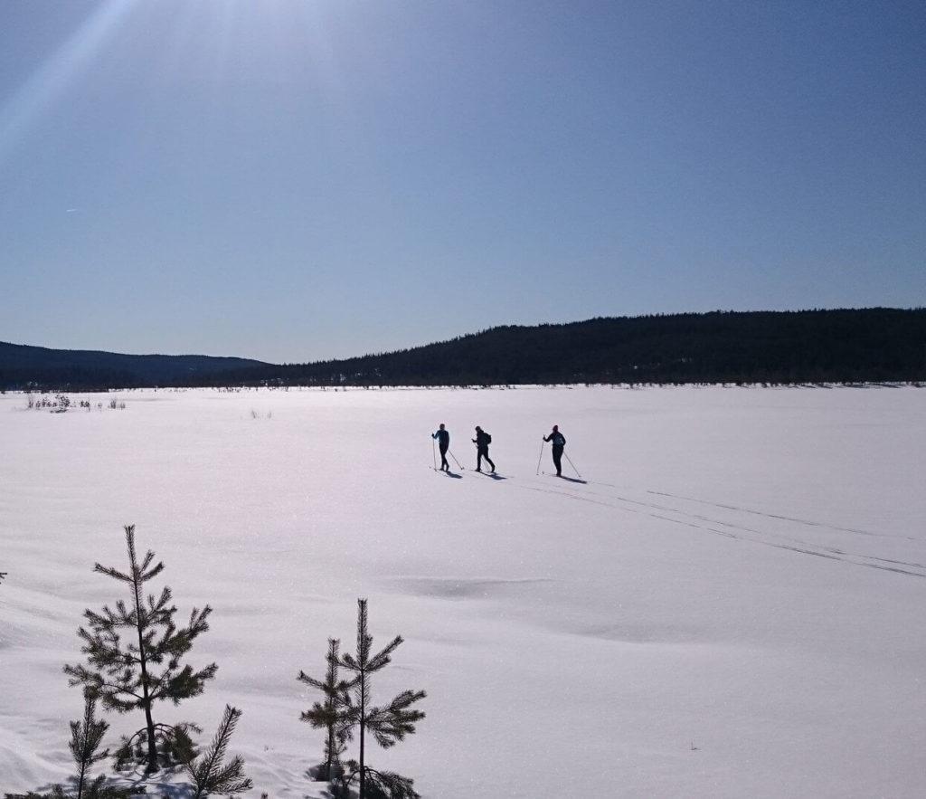 Personer åker skidor på skaren
