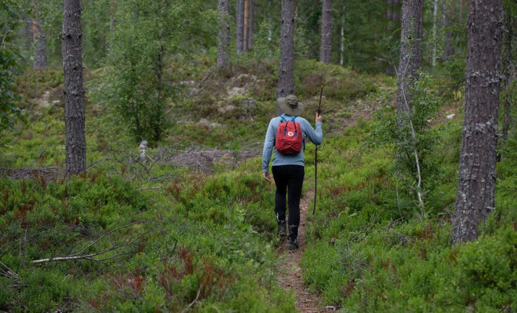 En person vandrar på en stig med en vandringspinne