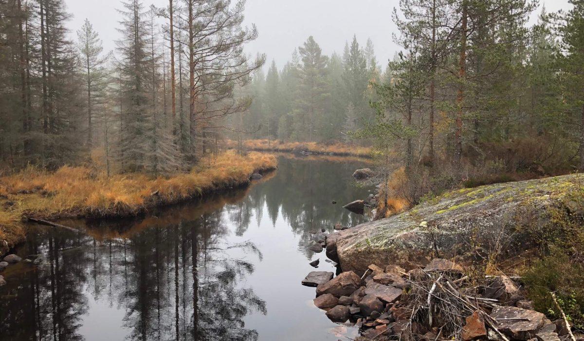 Ett vattendrag