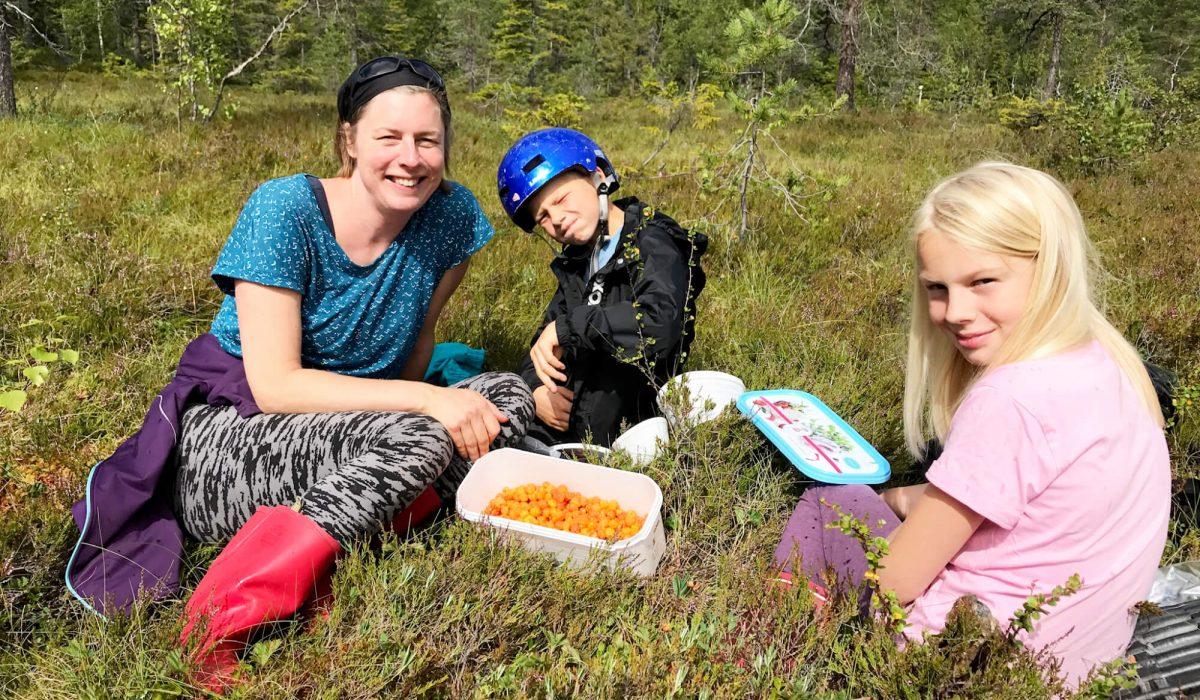 Tre personer sitter i en myr och plockar hjortron