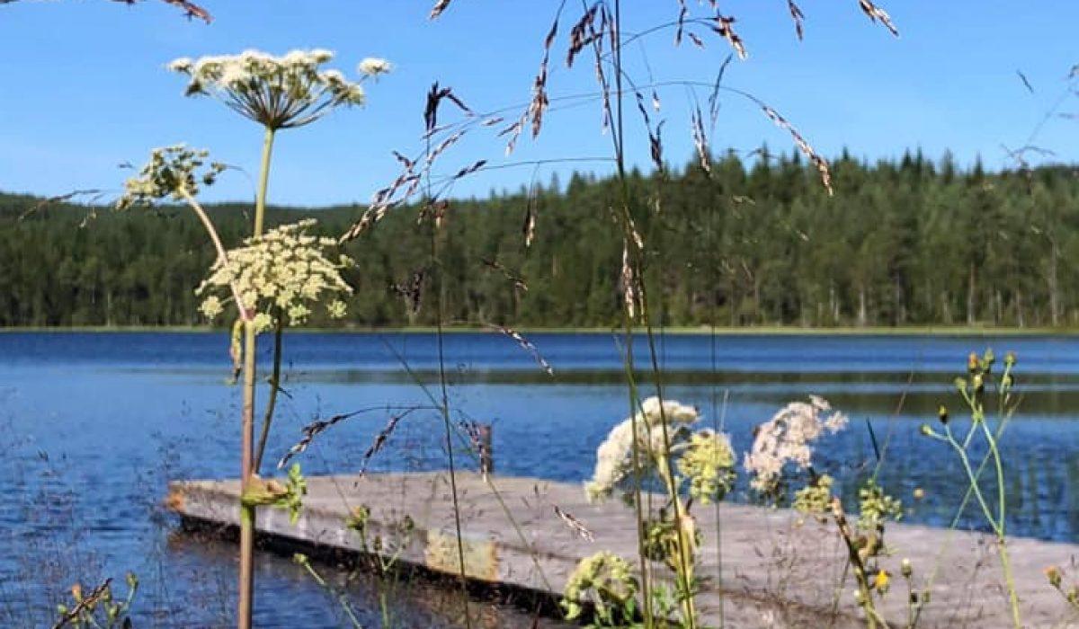 Blommor, sjö och brygga