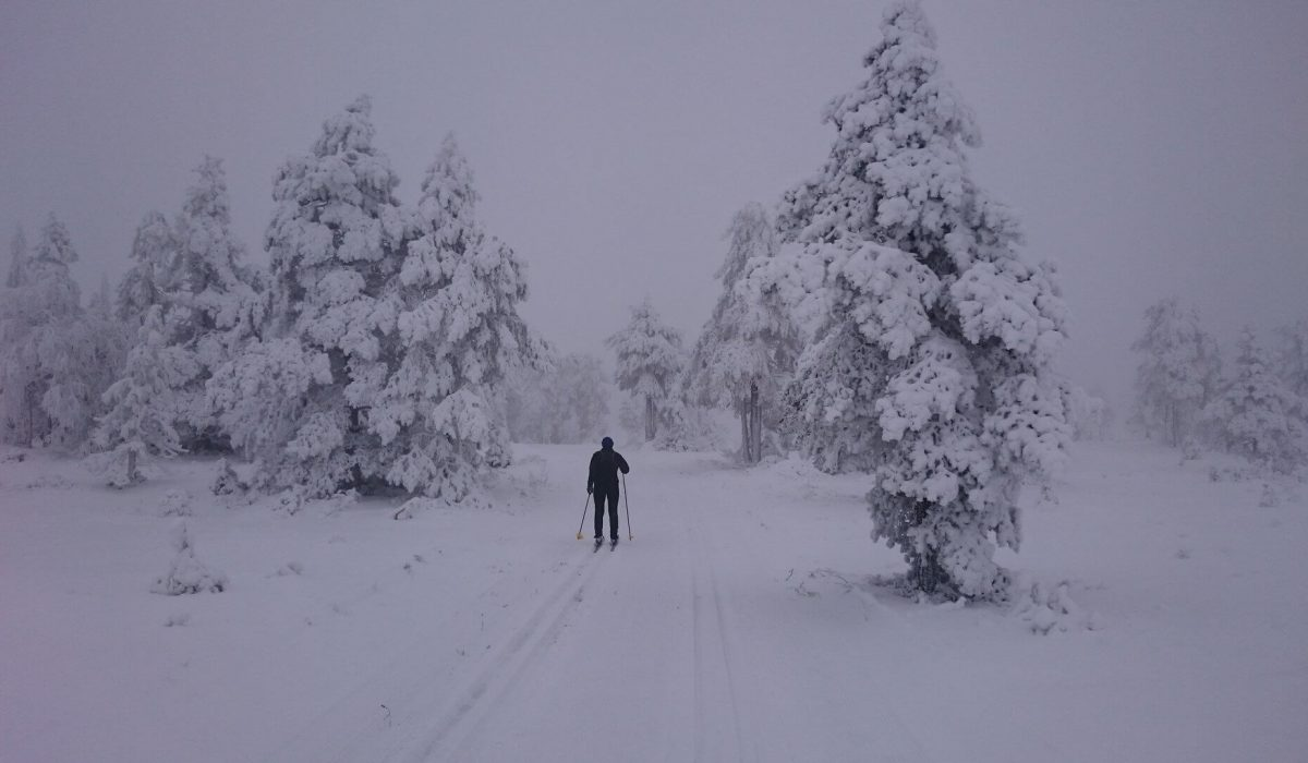 Skidspår i ett vitt landskap