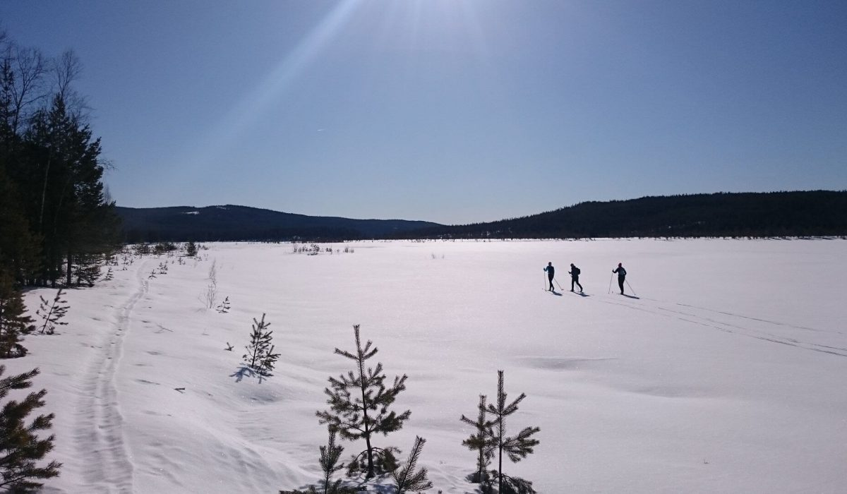 Personer skidar i ett öppet landskap
