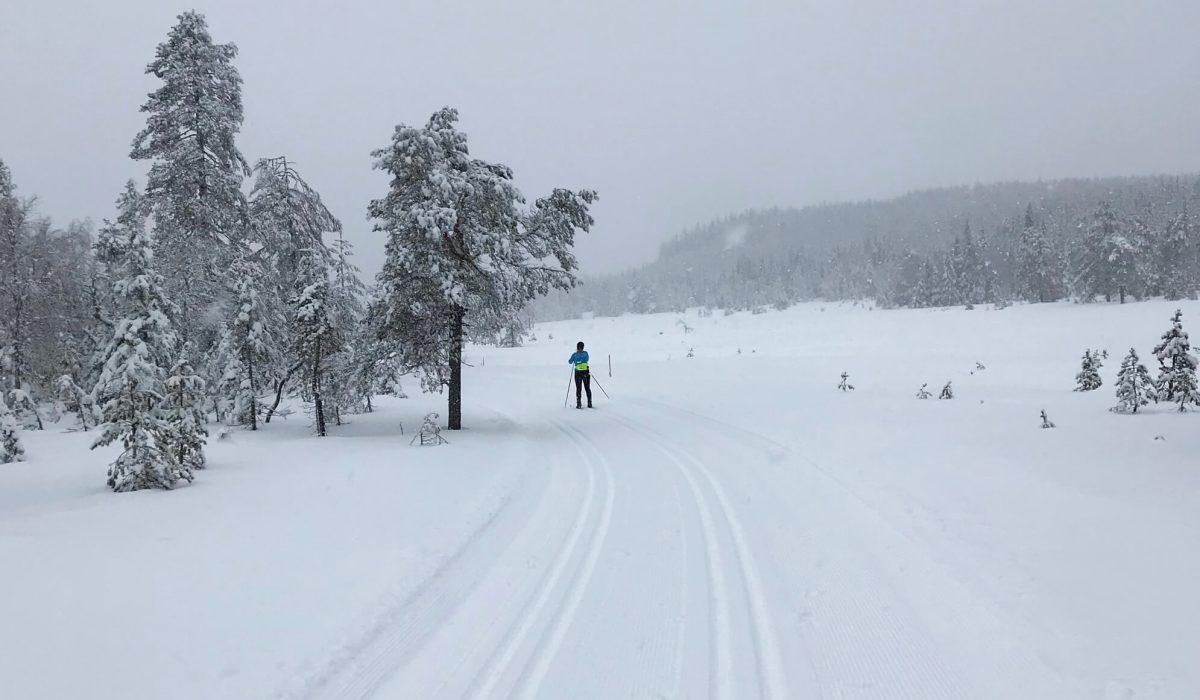 Person skidar i ett vitt landskap