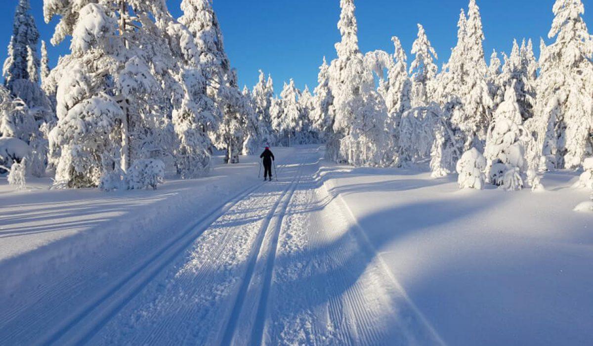 Person åker skidor i vinterlandskap