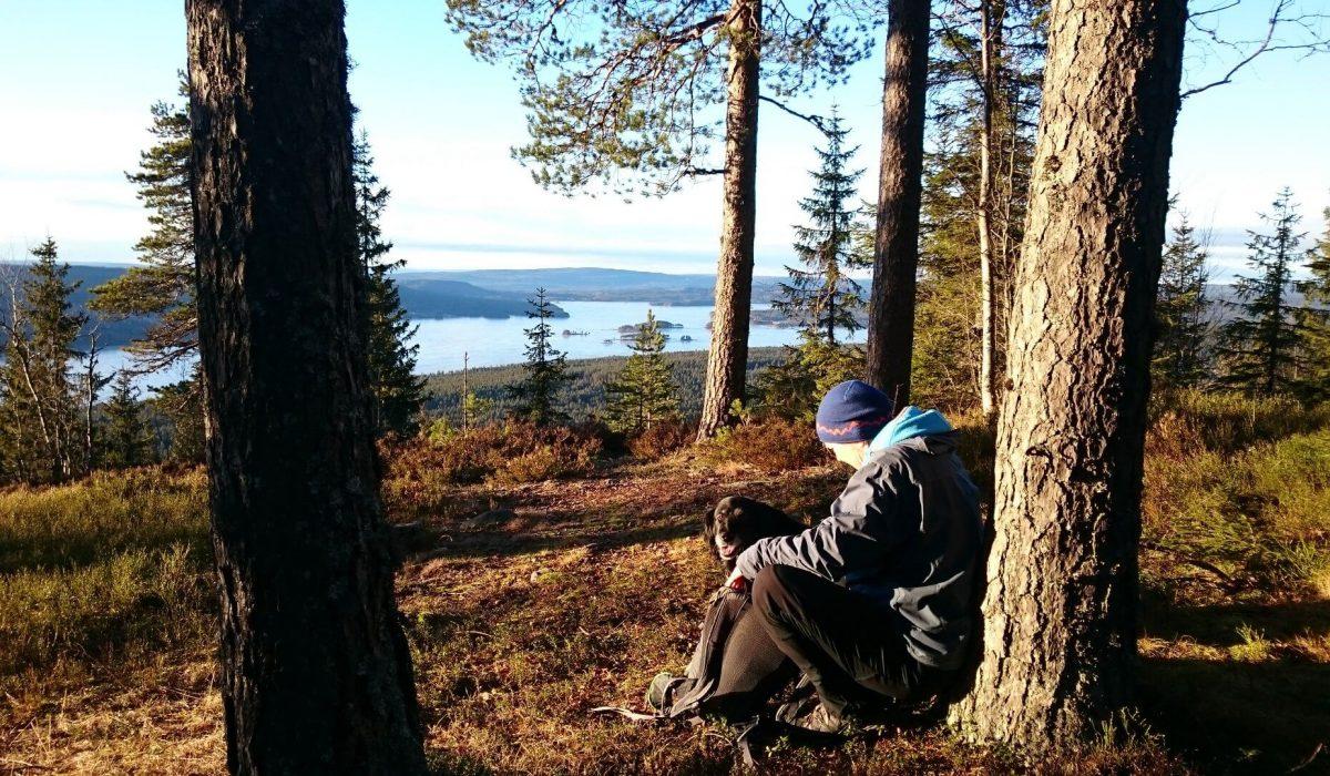 Person och hund sitter vid ett träd och studerar utsikten över en sjö