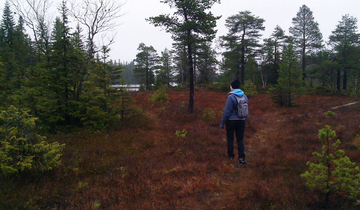 Person vandrar genom skogen
