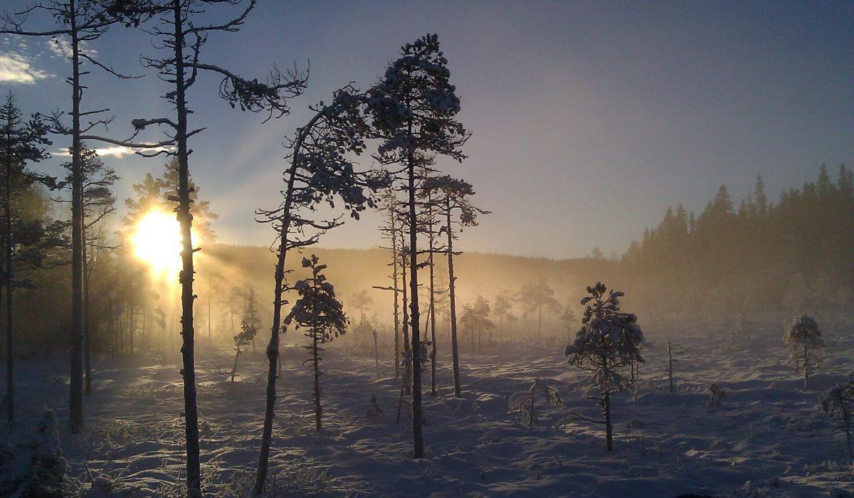 Vinterlandsskap i magiskt ljus
