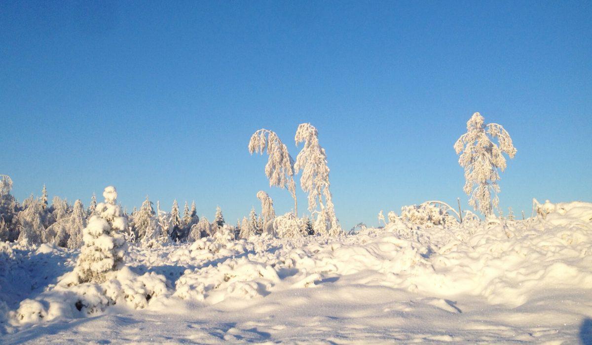Vinterlandsskap